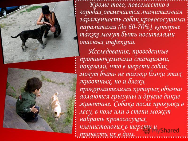 Кроме того, повсеместно в городах отмечается значительная зараженность собак кровососущими паразитами (до 60-70%), которые также могут быть носителями опасных инфекций. Исследования, проведенные противочумными станциями, показали, что в шерсти собак