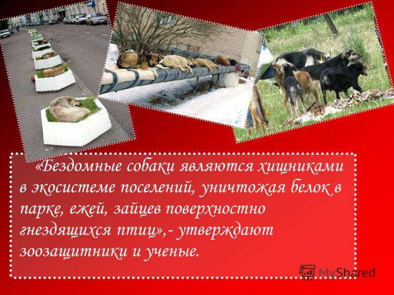 «Бездомные собаки являются хищниками в экосистеме поселений, уничтожая белок в парке, ежей, зайцев поверхностно гнездящихся птиц»,- утверждают зоозащитники и ученые.