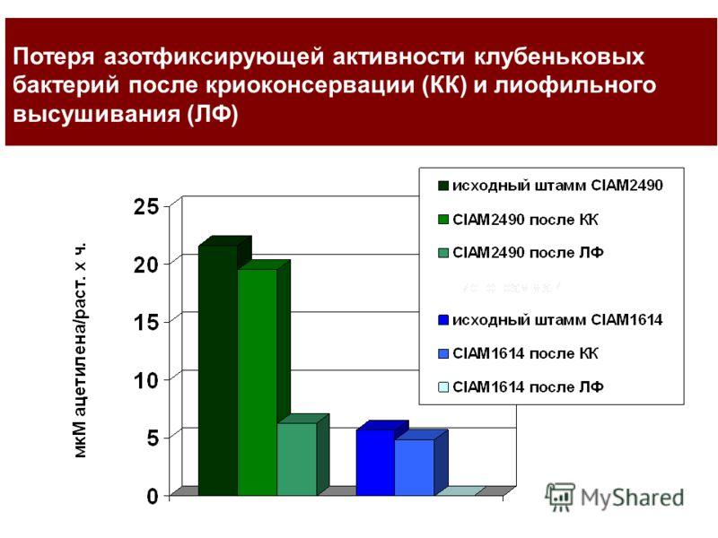 Потеря азотфиксирующей активности клубеньковых бактерий после криоконсервации (КК) и лиофильного высушивания (ЛФ)