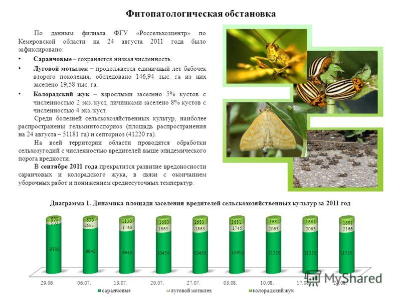 Фитопатологическая обстановка По данным филиала ФГУ «Россельхозцентр» по Кемеровской области на 24 августа 2011 года было зафиксировано: Саранчовые – сохраняется низкая численность. Луговой мотылек – продолжается единичный лет бабочек второго поколен
