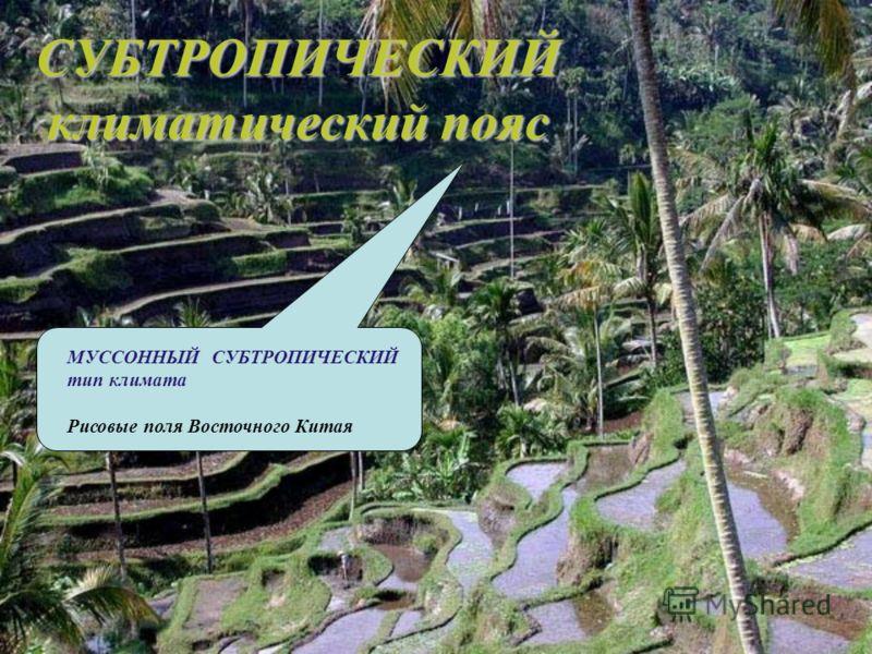 СУБТРОПИЧЕСКИЙ климатический пояс МУССОННЫЙ СУБТРОПИЧЕСКИЙ тип климата Рисовые поля Восточного Китая