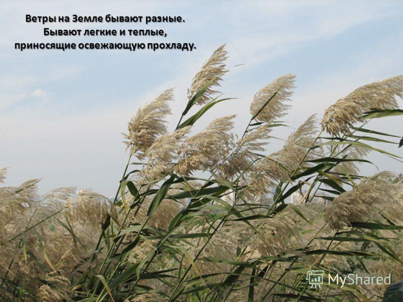 Ветры на Земле бывают разные. Бывают легкие и теплые, приносящие освежающую прохладу.