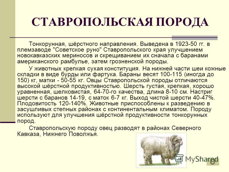 СТАВРОПОЛЬСКАЯ ПОРОДА Тонкорунная, шёрстного направления. Выведена в 1923-50 гг. в племзаводе