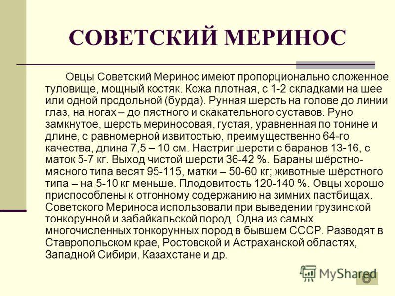 СОВЕТСКИЙ МЕРИНОС Овцы Советский Меринос имеют пропорционально сложенное туловище, мощный костяк. Кожа плотная, с 1-2 складками на шее или одной продольной (бурда). Рунная шерсть на голове до линии глаз, на ногах – до пястного и скакательного суставо