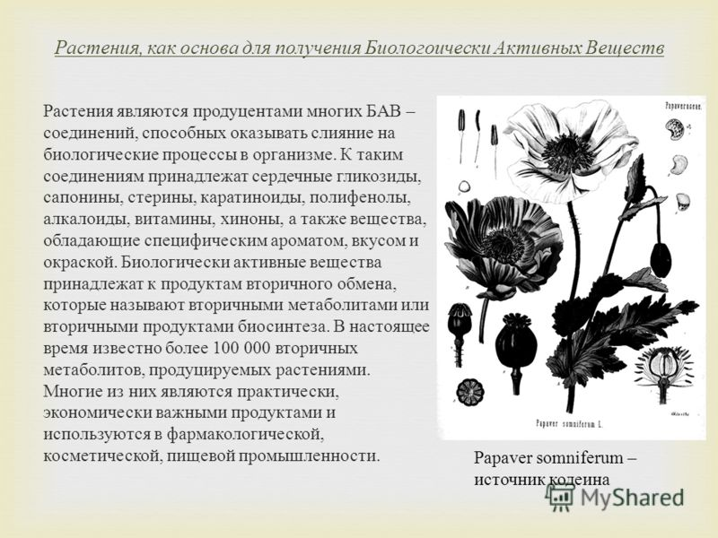 Растения, как основа для получения Биологоически Активных Веществ Растения являются продуцентами многих БАВ – соединений, способных оказывать слияние на биологические процессы в организме. К таким соединениям принадлежат сердечные гликозиды, сапонины