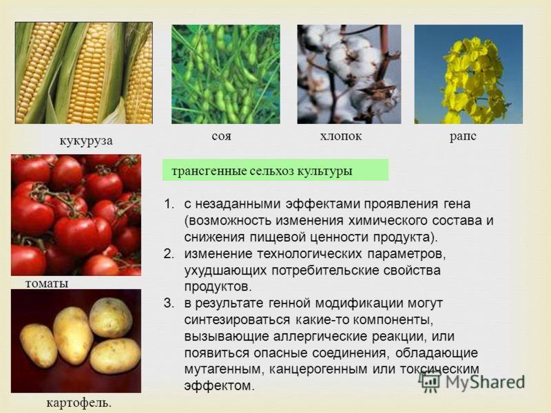 трансгенные сельхоз культуры 1.с незаданными эффектами проявления гена (возможность изменения химического состава и снижения пищевой ценности продукта). 2.изменение технологических параметров, ухудшающих потребительские свойства продуктов. 3.в резуль