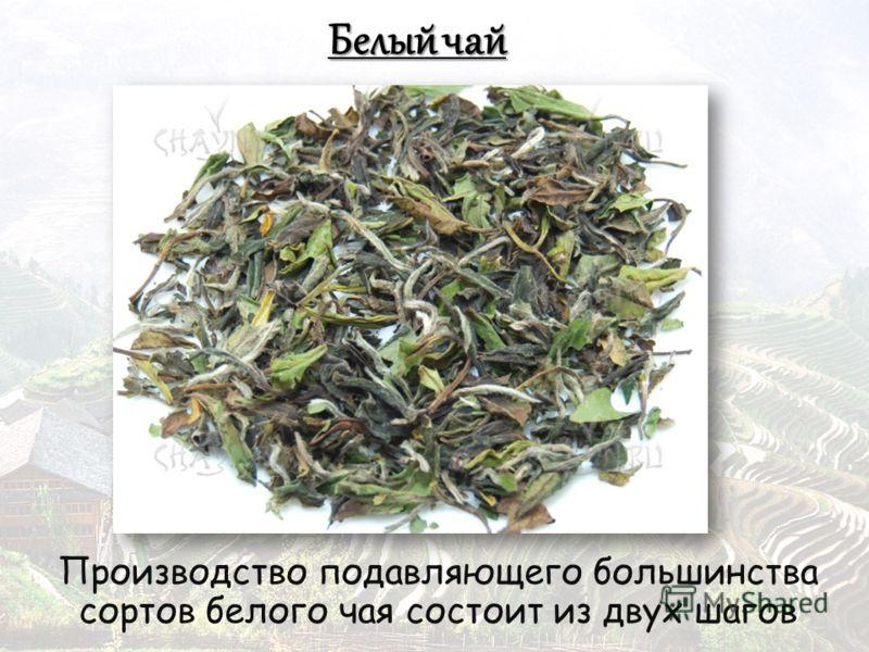 Производство подавляющего большинства сортов белого чая состоит из двух шагов
