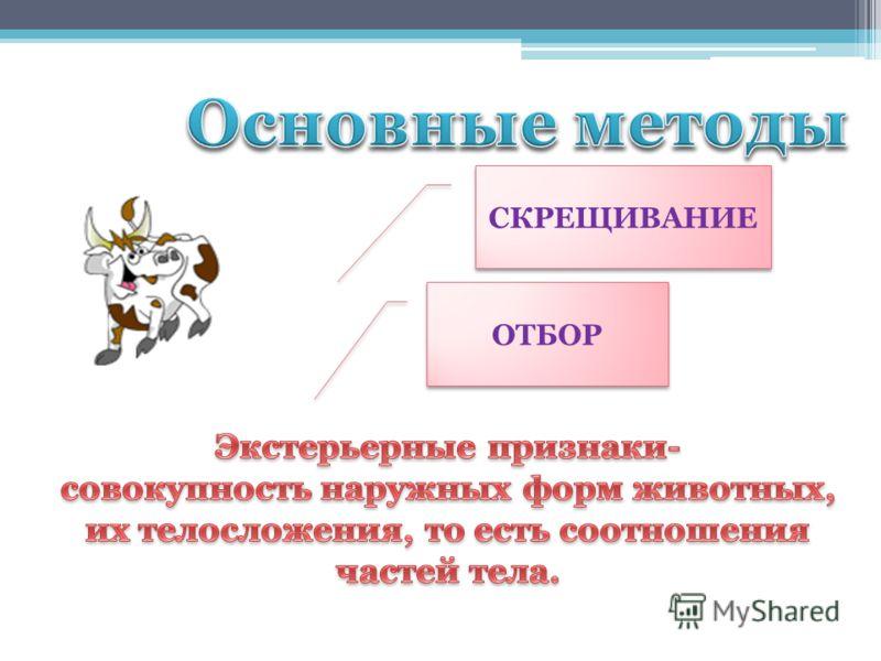 СКРЕЩИВАНИЕ ОТБОР