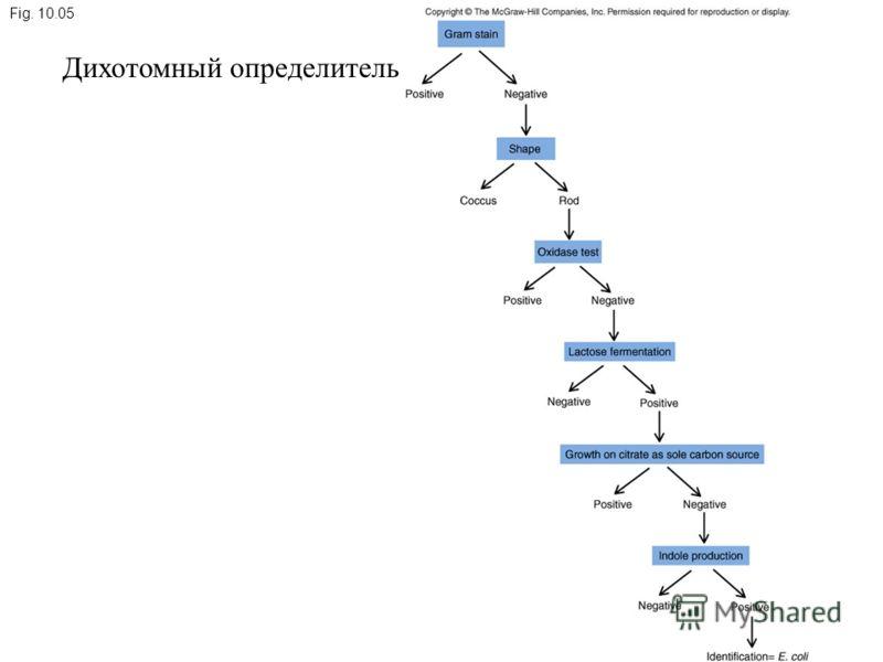 Fig. 10.05 Дихотомный определитель