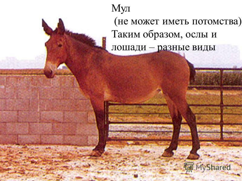 Мул (не может иметь потомства) Таким образом, ослы и лошади – разные виды