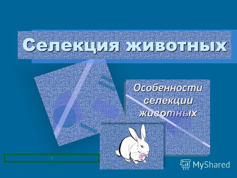 Особенности селекции животных Особенности селекции животных Селекция животных /