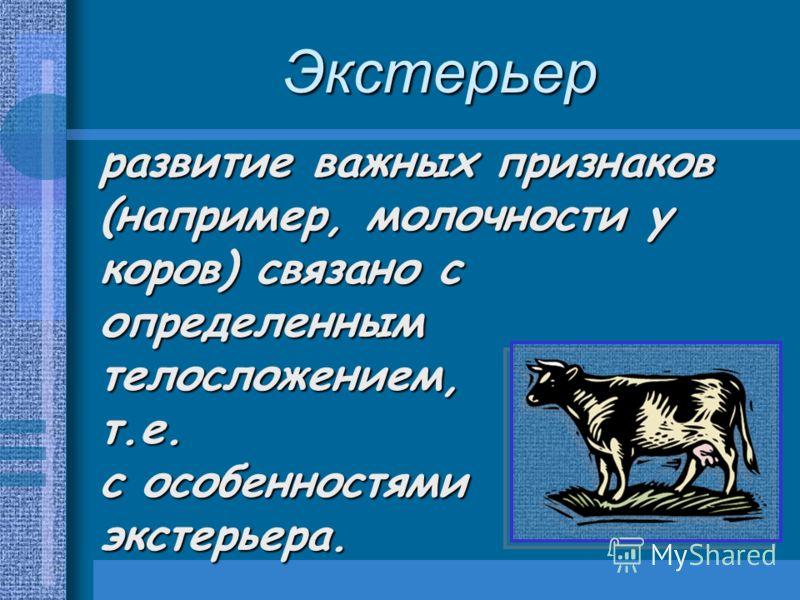 Экстерьер развитие важных признаков (например, молочности у коров) связано с определенным телосложением, т.е. с особенностями экстерьера.