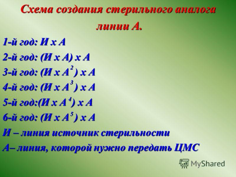 Схема создания стерильного аналога линии А. линии А. 1-й год: И х А 2-й год: (И х А) х А 3-й год: (И х А ) х А 4-й год: (И х А ) х А 5-й год:(И х А ) х А 6-й год: (И х А ) х А И – линия источник стерильности А– линия, которой нужно передать ЦМС 2 3 4