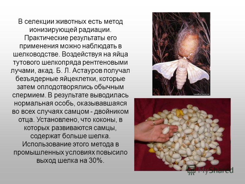 В селекции животных есть метод ионизирующей радиации. Практические результаты его применения можно наблюдать в шелководстве. Воздействуя на яйца тутового шелкопряда рентгеновыми лучами, акад. Б. Л. Астауров получал безъядерные яйцеклетки, которые зат