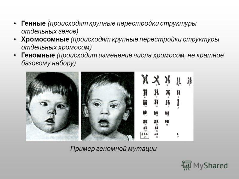 Генные (происходят крупные перестройки структуры отдельных генов) Хромосомные (происходят крупные перестройки структуры отдельных хромосом) Геномные (происходит изменение числа хромосом, не кратное базовому набору) Пример геномной мутации