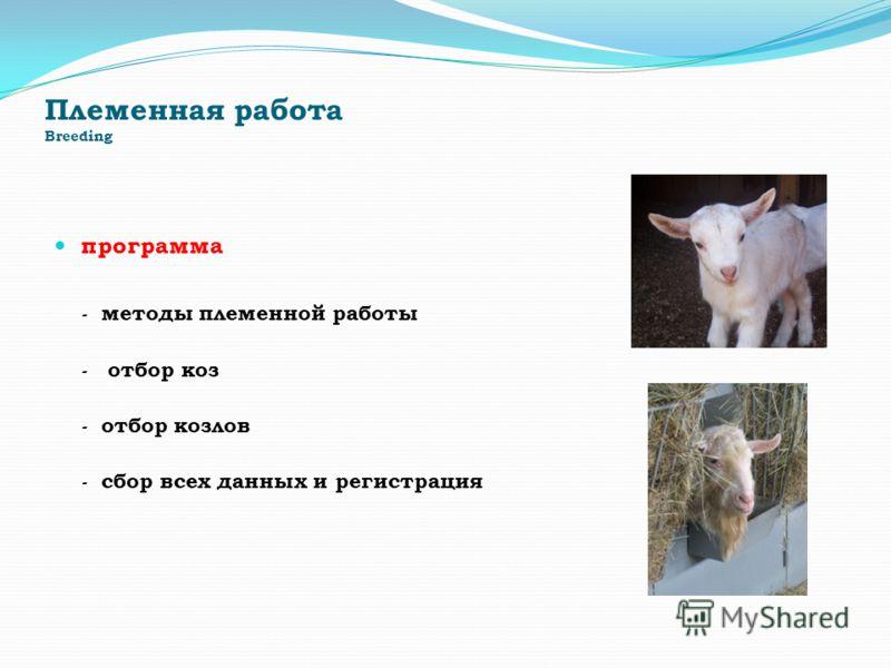 Племенная работа Breeding программа - методы племенной работы - отбор коз - отбор козлов - сбор всех данных и регистрация