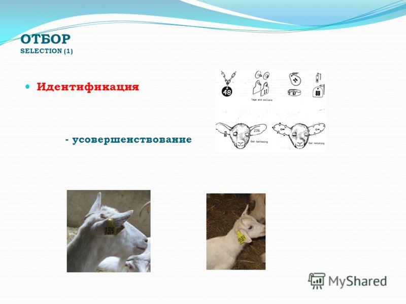 ОТБОР SELECTION (1) Идентификация - усовершенствование