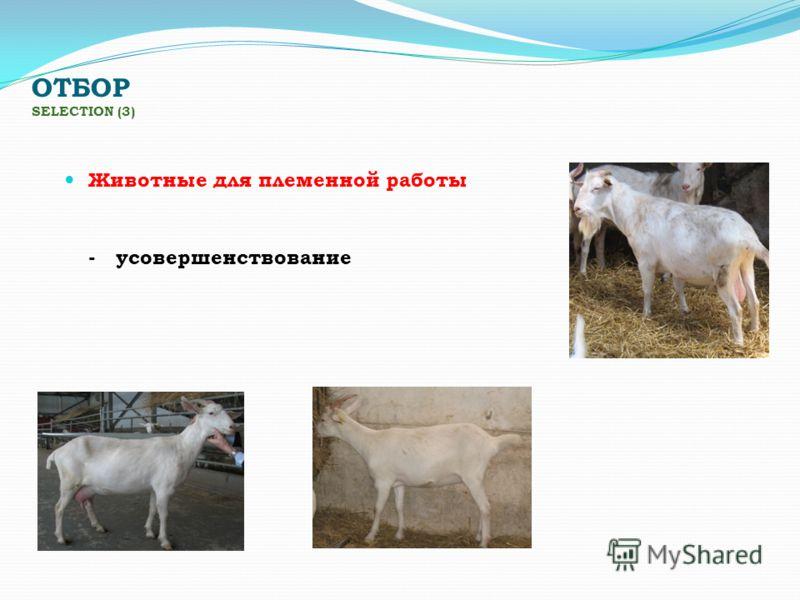 ОТБОР SELECTION (3) Животные для племенной работы - усовершенствование