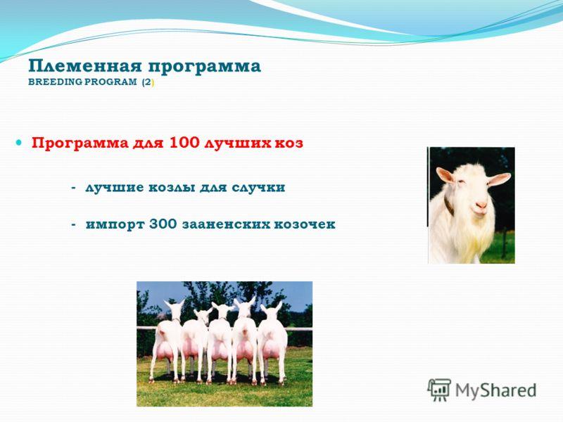 Племенная программа BREEDING PROGRAM (2) Программа для 100 лучших коз - лучшие козлы для случки - импорт 300 зааненских козочек