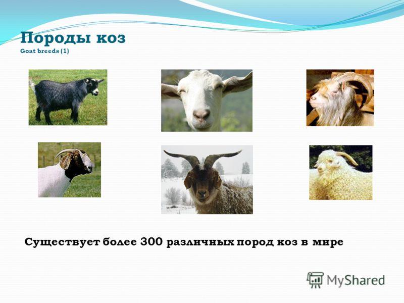 Породы коз Goat breeds (1) Существует более 300 различных пород коз в мире