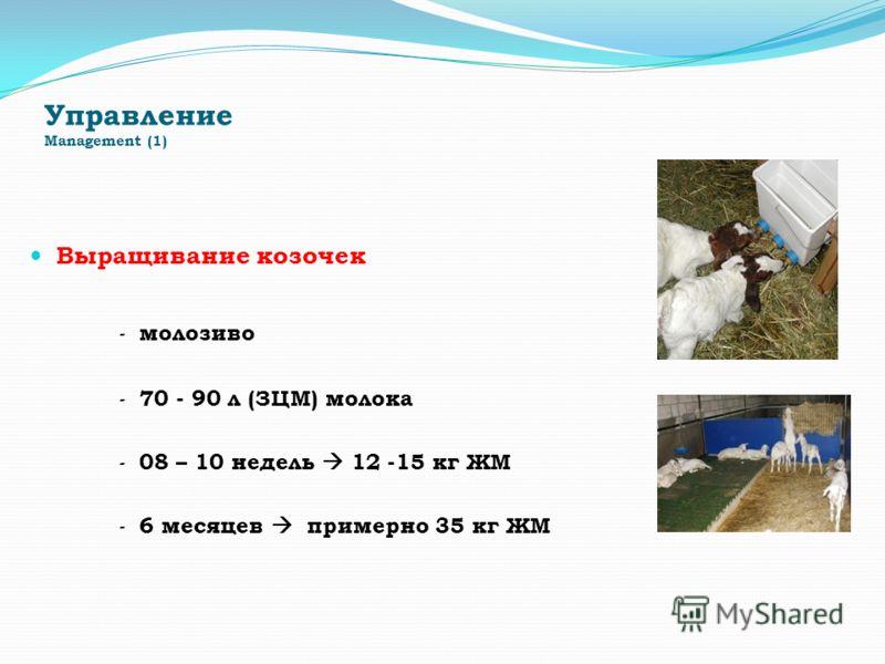 Управление Management (1) Выращивание козочек - молозиво - 70 - 90 л (ЗЦМ) молока - 08 – 10 недель 12 -15 кг ЖМ - 6 месяцев примерно 35 кг ЖМ