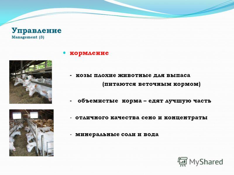 Управление Management (3) кормление - козы плохие животные для выпаса (питаются веточным кормом) - объемистые корма – едят лучшую часть - отличного качества сено и концентраты - минеральные соли и вода
