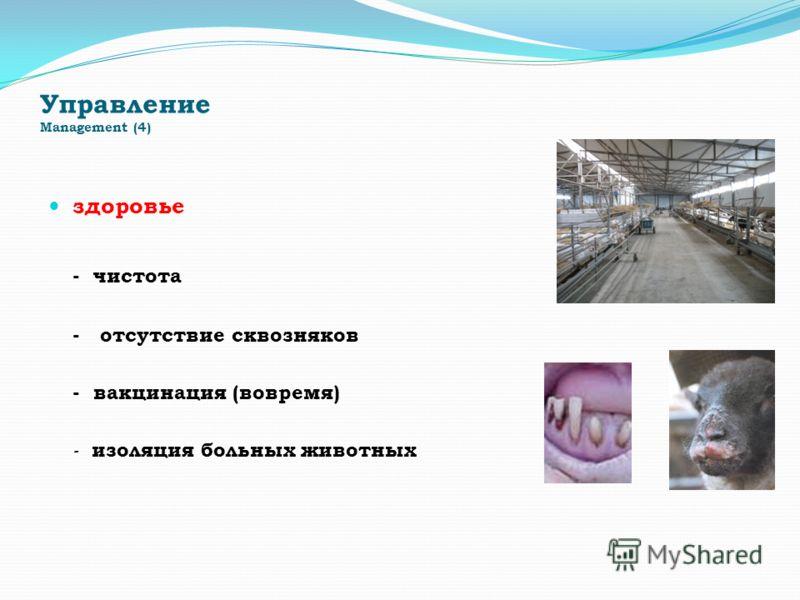 Управление Management (4) здоровье - чистота - отсутствие сквозняков - вакцинация (вовремя) - изоляция больных животных