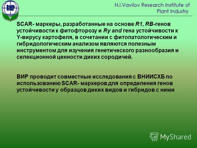 SCAR- маркеры, разработанные на основе R1, RB-генов устойчивости к фитофторозу и Ry and гена устойчивости к Y-вирусу картофеля, в сочетании с фитопатологическим и гибридологическим анализом являются полезным инструментом для изучения генетического ра