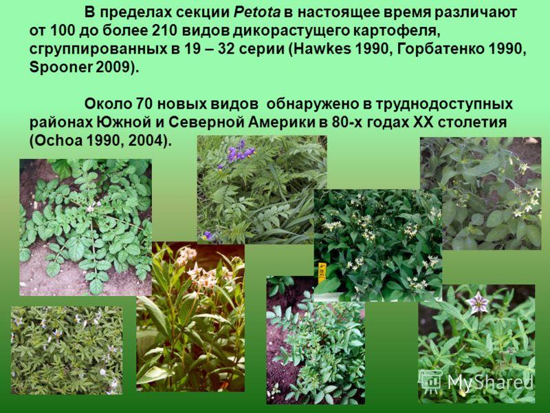В пределах секции Petota в настоящее время различают от 100 до более 210 видов дикорастущего картофеля, сгруппированных в 19 – 32 серии (Hawkes 1990, Горбатенко 1990, Spooner 2009). Около 70 новых видов обнаружено в труднодоступных районах Южной и Се