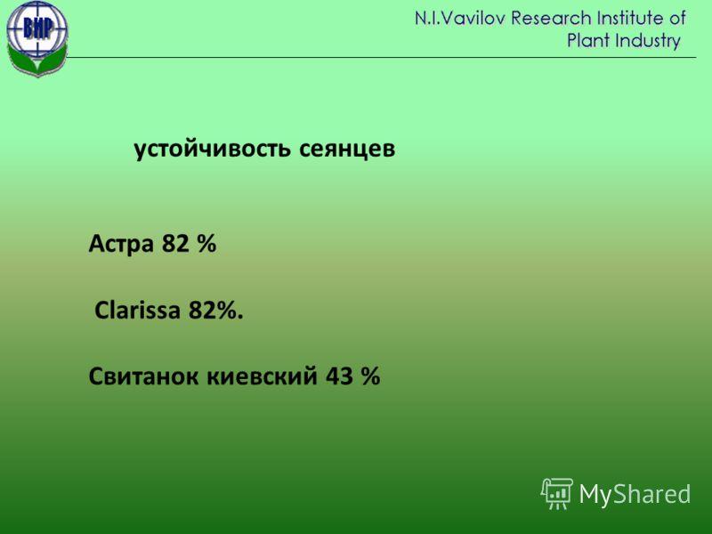 Астра 82 % Clarissa 82%. Свитанок киевский 43 % устойчивость сеянцев