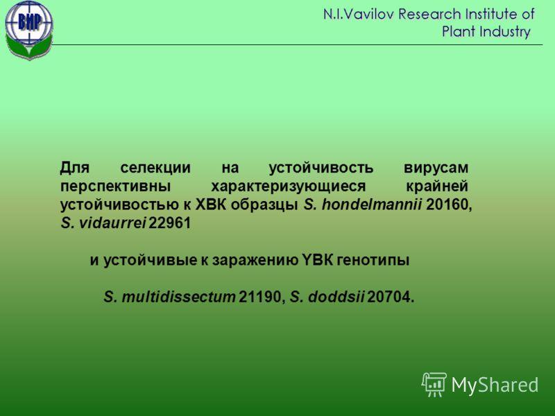 Для селекции на устойчивость вирусам перспективны характеризующиеся крайней устойчивостью к XВК образцы S. hondelmannii 20160, S. vidaurrei 22961 и устойчивые к заражению YВК генотипы S. multidissectum 21190, S. doddsii 20704.