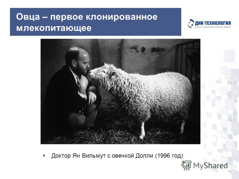 Овца – первое клонированное млекопитающее Доктор Ян Вильмут с овечкой Долли (1996 год)