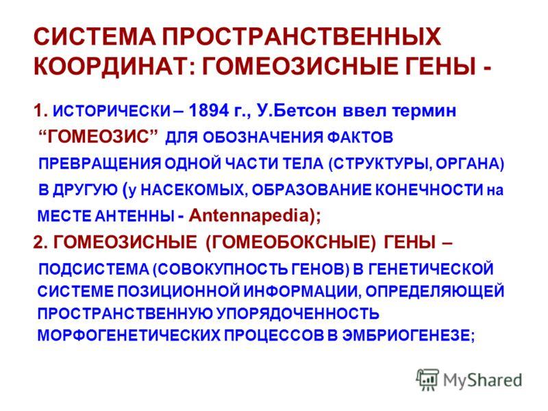 СИСТЕМА ПРОСТРАНСТВЕННЫХ КООРДИНАТ: ГОМЕОЗИСНЫЕ ГЕНЫ - 1. ИСТОРИЧЕСКИ – 1894 г., У.Бетсон ввел термин ГОМЕОЗИС ДЛЯ ОБОЗНАЧЕНИЯ ФАКТОВ ПРЕВРАЩЕНИЯ ОДНОЙ ЧАСТИ ТЕЛА (СТРУКТУРЫ, ОРГАНА) В ДРУГУЮ ( у НАСЕКОМЫХ, ОБРАЗОВАНИЕ КОНЕЧНОСТИ на МЕСТЕ АНТЕННЫ - A