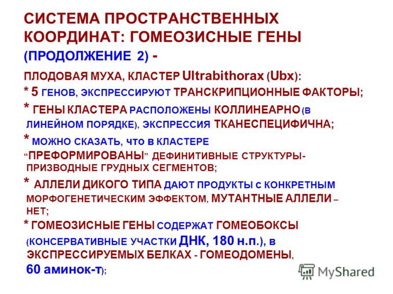 СИСТЕМА ПРОСТРАНСТВЕННЫХ КООРДИНАТ: ГОМЕОЗИСНЫЕ ГЕНЫ (ПРОДОЛЖЕНИЕ 2) - ПЛОДОВАЯ МУХА, КЛАСТЕР Ultrabithorax ( Ubx ): * 5 ГЕНОВ, ЭКСПРЕССИРУЮТ ТРАНСКРИПЦИОННЫЕ ФАКТОРЫ; * ГЕНЫ КЛАСТЕРА РАСПОЛОЖЕНЫ КОЛЛИНЕАРНО (В ЛИНЕЙНОМ ПОРЯДКЕ ), ЭКСПРЕССИЯ ТКАНЕСПЕ