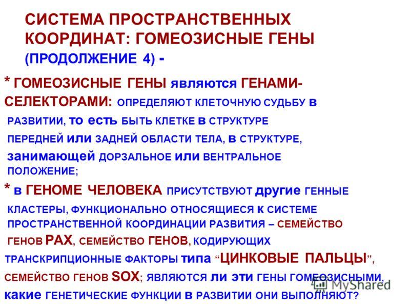 СИСТЕМА ПРОСТРАНСТВЕННЫХ КООРДИНАТ: ГОМЕОЗИСНЫЕ ГЕНЫ (ПРОДОЛЖЕНИЕ 4) - * ГОМЕОЗИСНЫЕ ГЕНЫ являются ГЕНАМИ- СЕЛЕКТОРАМИ: ОПРЕДЕЛЯЮТ КЛЕТОЧНУЮ СУДЬБУ в РАЗВИТИИ, то есть БЫТЬ КЛЕТКЕ в СТРУКТУРЕ ПЕРЕДНЕЙ или ЗАДНЕЙ ОБЛАСТИ ТЕЛА, в СТРУКТУРЕ, занимающей