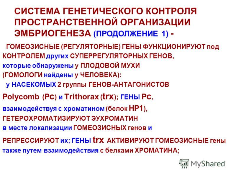 СИСТЕМА ГЕНЕТИЧЕСКОГО КОНТРОЛЯ ПРОСТРАНСТВЕННОЙ ОРГАНИЗАЦИИ ЭМБРИОГЕНЕЗА (ПРОДОЛЖЕНИЕ 1) - ГОМЕОЗИСНЫЕ (РЕГУЛЯТОРНЫЕ) ГЕНЫ ФУНКЦИОНИРУЮТ под КОНТРОЛЕМ других СУПЕРРЕГУЛЯТОРНЫХ ГЕНОВ, которые обнаружены у ПЛОДОВОЙ МУХИ (ГОМОЛОГИ найдены у ЧЕЛОВЕКА): у
