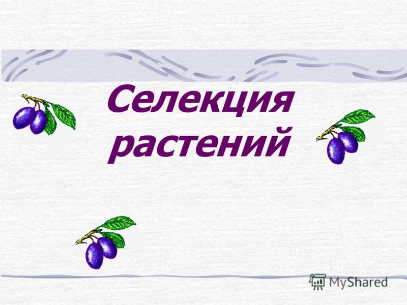 Селекция растений