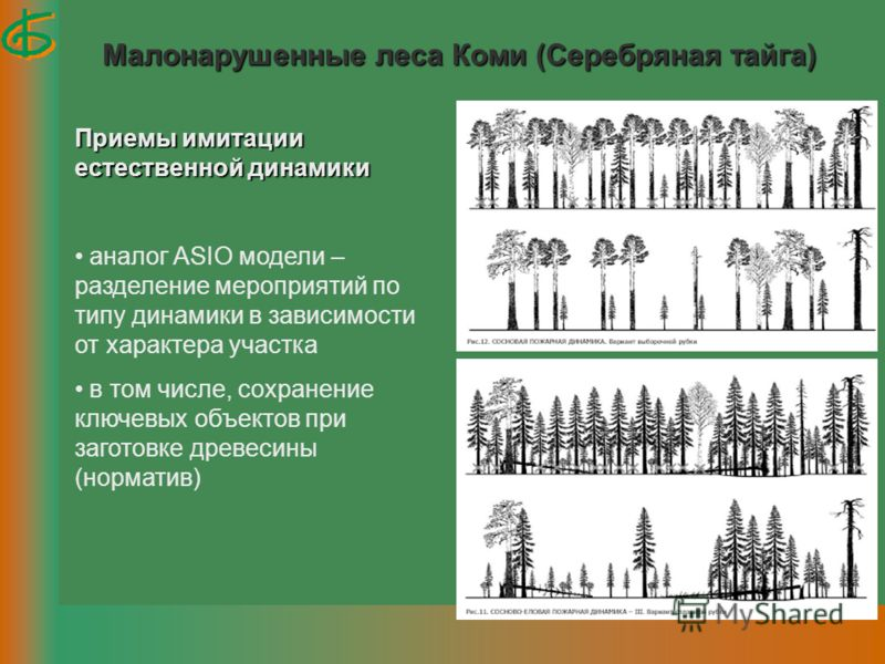 Малонарушенные леса Коми (Серебряная тайга) Приемы имитации естественной динамики аналог ASIO модели – разделение мероприятий по типу динамики в зависимости от характера участка в том числе, сохранение ключевых объектов при заготовке древесины (норма