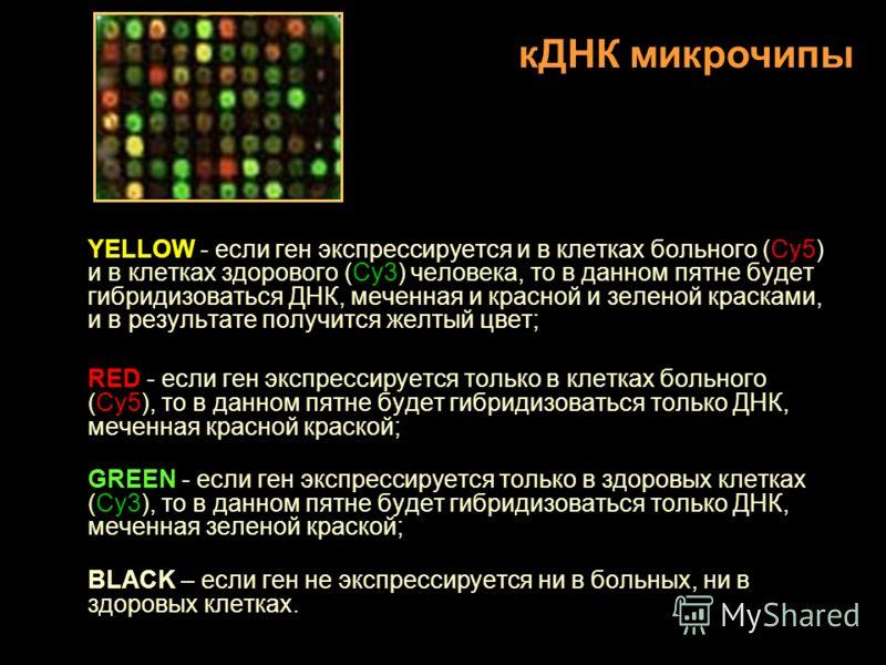 YELLOW - если ген экспрессируется и в клетках больного (Cy5) и в клетках здорового (Cy3) человека, то в данном пятне будет гибридизоваться ДНК, меченная и красной и зеленой красками, и в результате получится желтый цвет; RED - если ген экспрессируетс