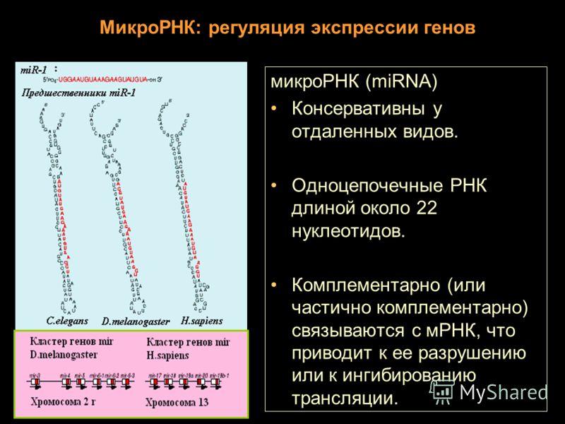 МикроРНК: регуляция экспрессии генов микроРНК (miRNA) Консервативны у отдаленных видов. Одноцепочечные РНК длиной около 22 нуклеотидов. Комплементарно (или частично комплементарно) связываются с мРНК, что приводит к ее разрушению или к ингибированию