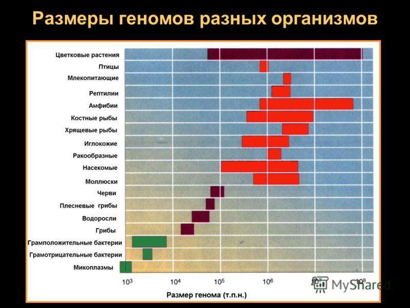 Размеры геномов разных организмов