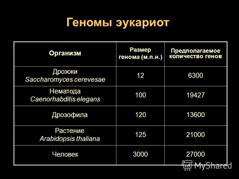 Геномы эукариот Организм Размер генома (м.п.н.) Предполагаемое количество генов Дрожжи Saccharomyces cerevesae 126300 Нематода Caenorhabditis elegans 10019427 Дрозофила12013600 Растение Arabidopsis thaliana 12521000 Человек300027000