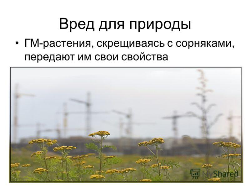 Вред для природы ГМ-растения, скрещиваясь с сорняками, передают им свои свойства