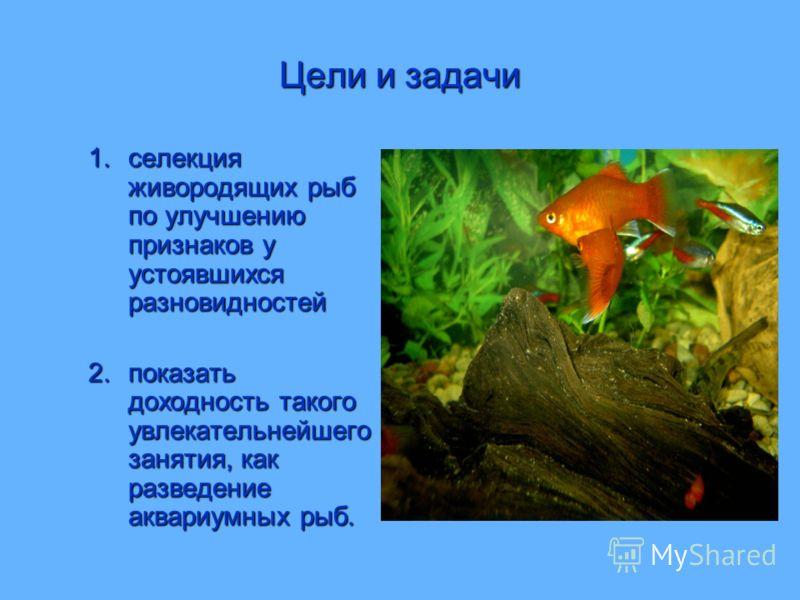 Цели и задачи 1.селекция живородящих рыб по улучшению признаков у устоявшихся разновидностей 2.показать доходность такого увлекательнейшего занятия, как разведение аквариумных рыб.