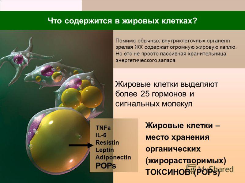 ТNFa IL-6 Resistin Leptin Adiponectin РОРs Что содержится в жировых клетках? Жировые клетки выделяют более 25 гормонов и сигнальных молекул Жировые клетки – место хранения органических (жирорастворимых) ТОКСИНОВ (POPs) Помимо обычных внутриклеточных