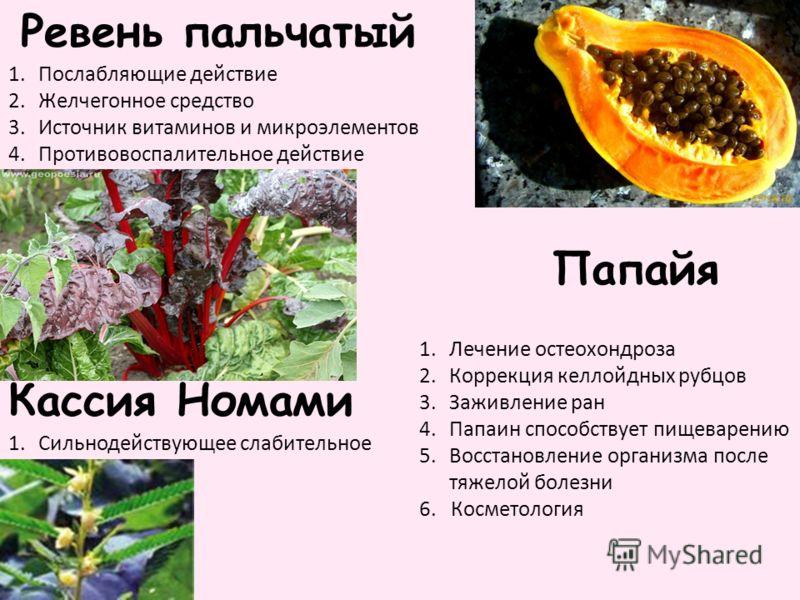 Ревень пальчатый Папайя 1.Послабляющие действие 2.Желчегонное средство 3.Источник витаминов и микроэлементов 4.Противовоспалительное действие 1.Лечение остеохондроза 2.Коррекция келлойдных рубцов 3.Заживление ран 4.Папаин способствует пищеварению 5.В
