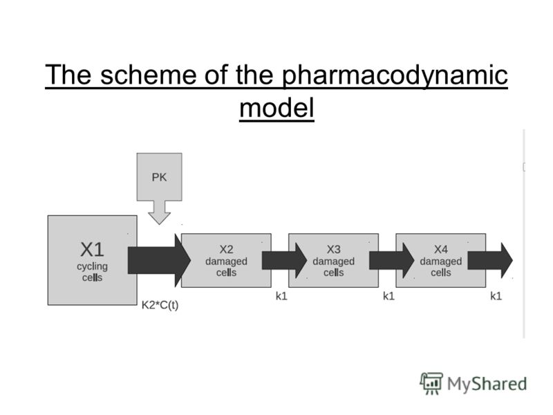 The scheme of the pharmacodynamic model