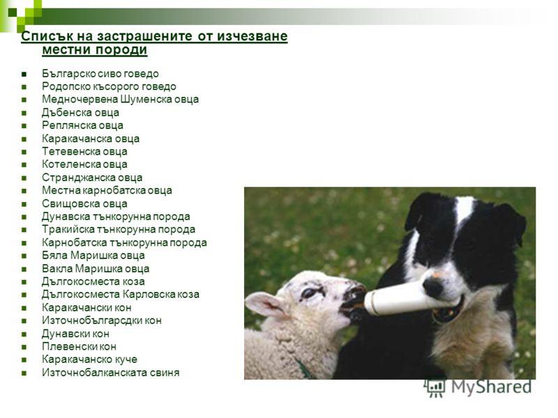 Списък на застрашените от изчезване местни породи Българско сиво говедо Родопско късорого говедо Медночервена Шуменска овца Дъбенска овца Реплянска овца Каракачанска овца Тетевенска овца Котеленска овца Странджанска овца Местна карнобатска овца Свищо