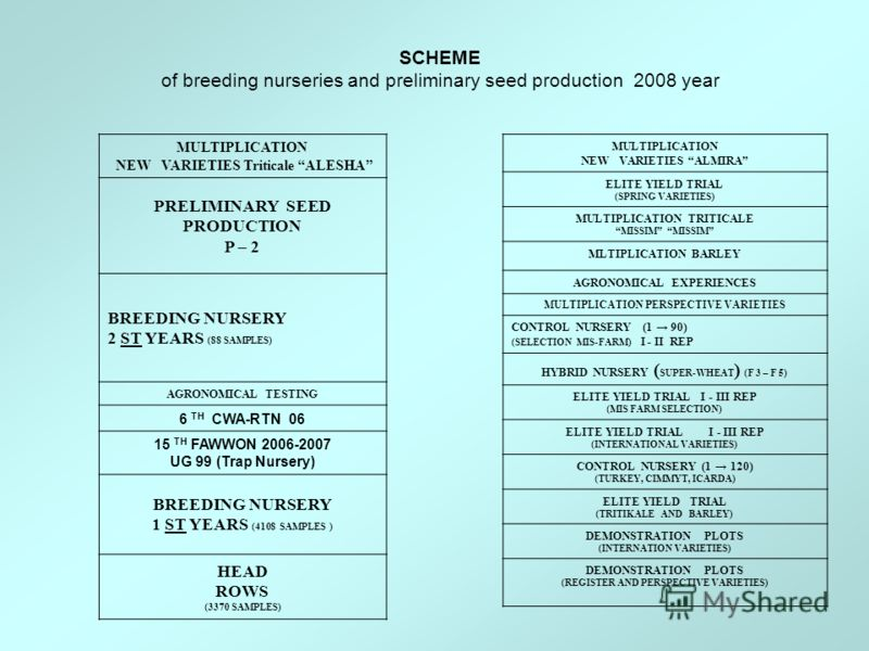 SCHEME of breeding nurseries and preliminary seed production 2007 year MULTIPLICATION NEW VARIETIES Triticale ALESHA PRELIMINARY SEED PRODUCTION P – 2 BREEDING NURSERY 2 ST YEARS (88 SAMPLES) AGRONOMICAL TESTING 6 TH CWA-RTN 06 15 TH FAWWON 2006-2007