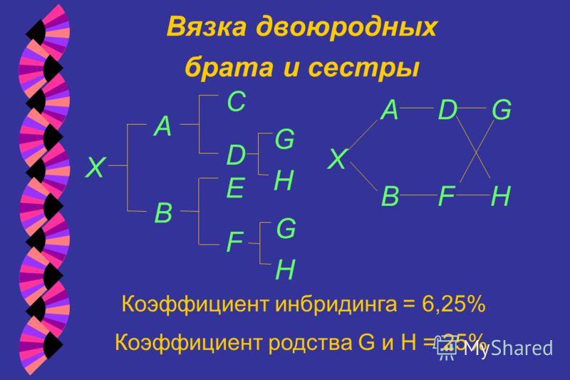 Вязка двоюродных брата и сестры Коэффициент инбридинга = 6,25% Коэффициент родства G и H = 25% A B X E D C X A B D F F H G H G H G
